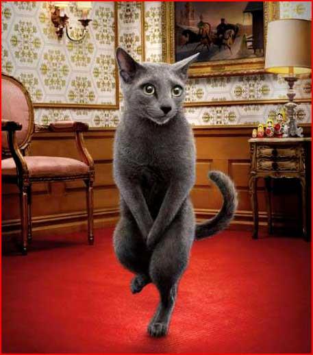 פרסומת של בית שימוש לחתולים