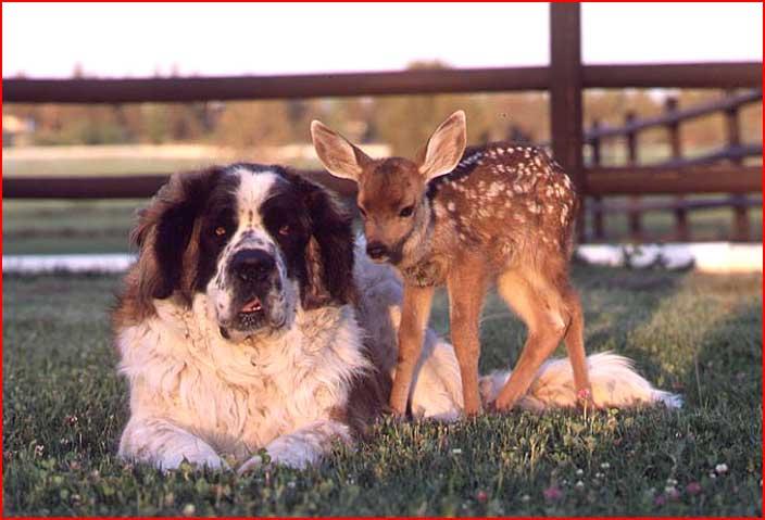 חיי כלבים
