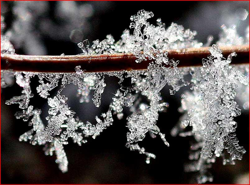 שירת החורף