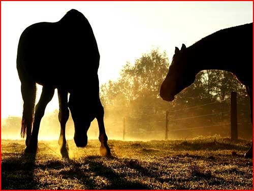 סוסים