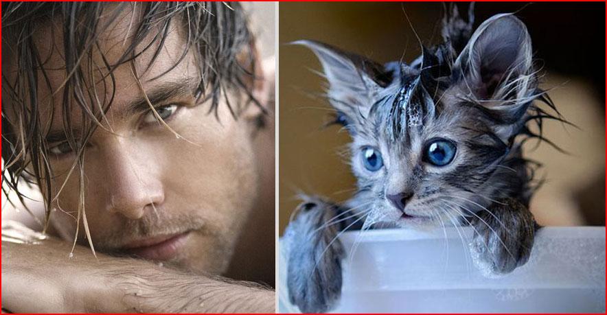 בחורים וחתולים