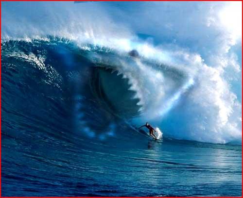 גל כריש
