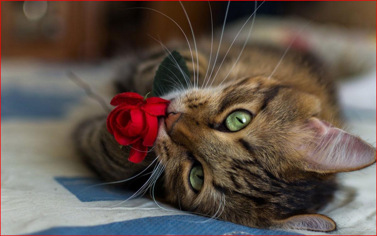 חתולים חמודים