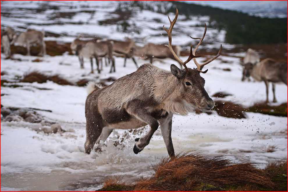 חיות בחורף