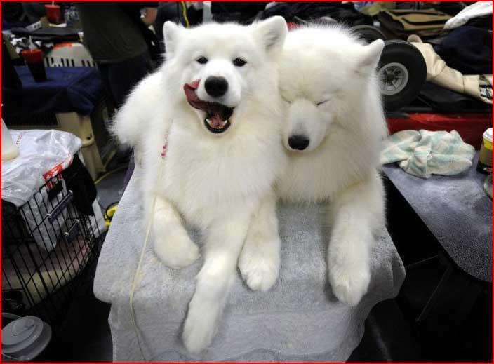 חיות מצחיקות