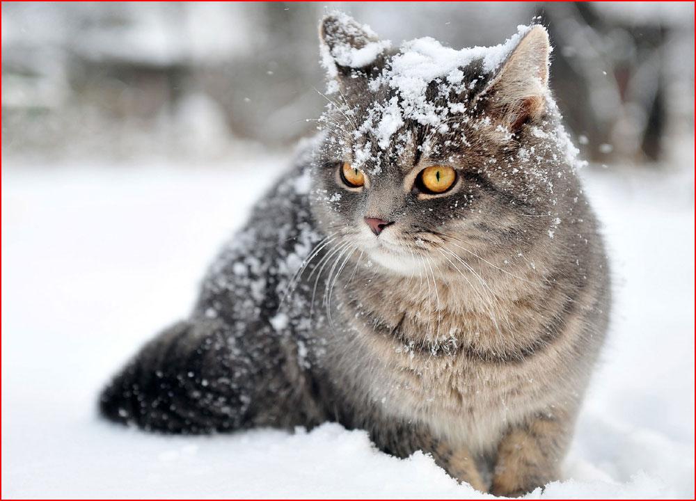 חיות בשלג