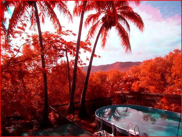 תמונות באינפרא אדום
