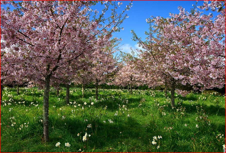 צבעים של אביב