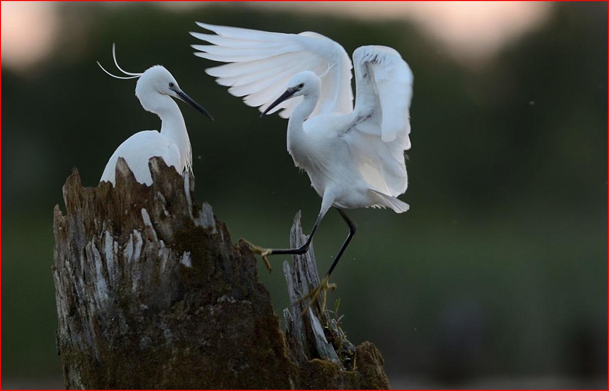 עולם של ציפורים