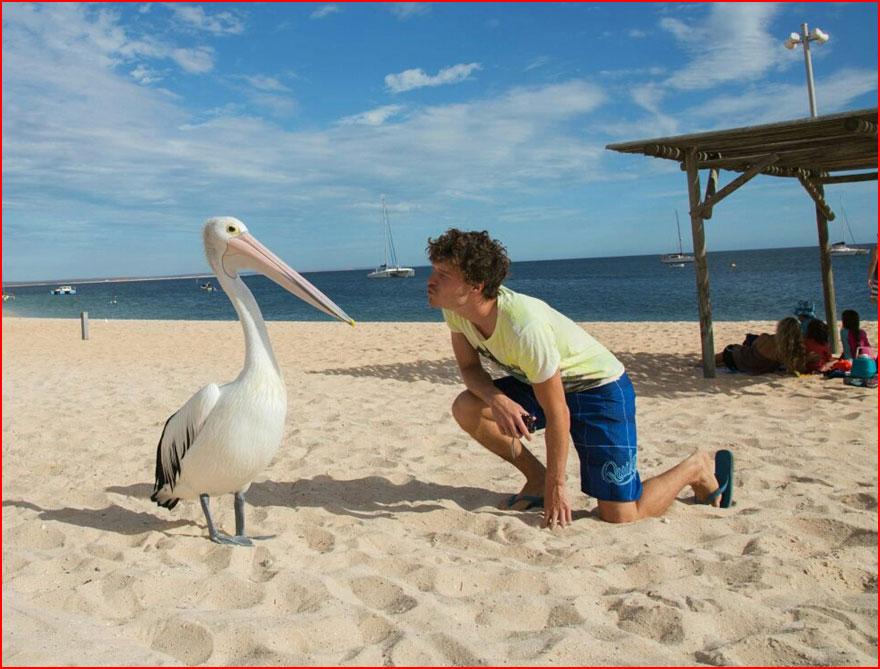 סלפי עם חיות מאת אלן דיקסון