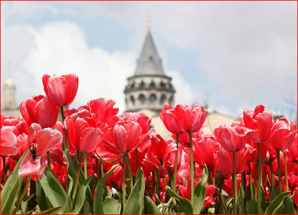 פסטיבל הצבעונים באיסטנבול