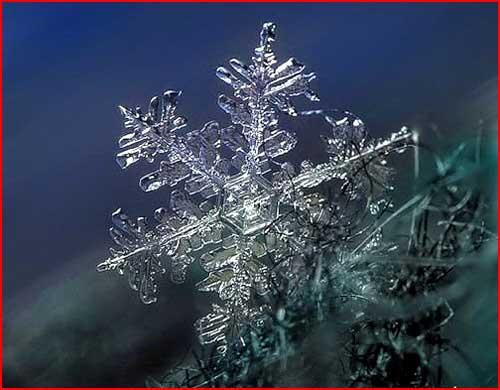 יופי של פתיתי השלג