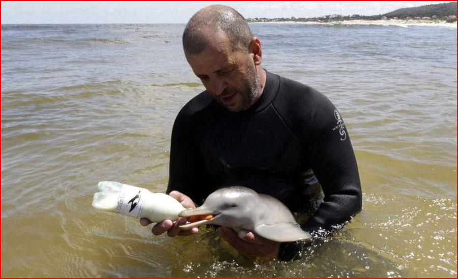 גבר מאורוגוואי הציל את גור הדולפין
