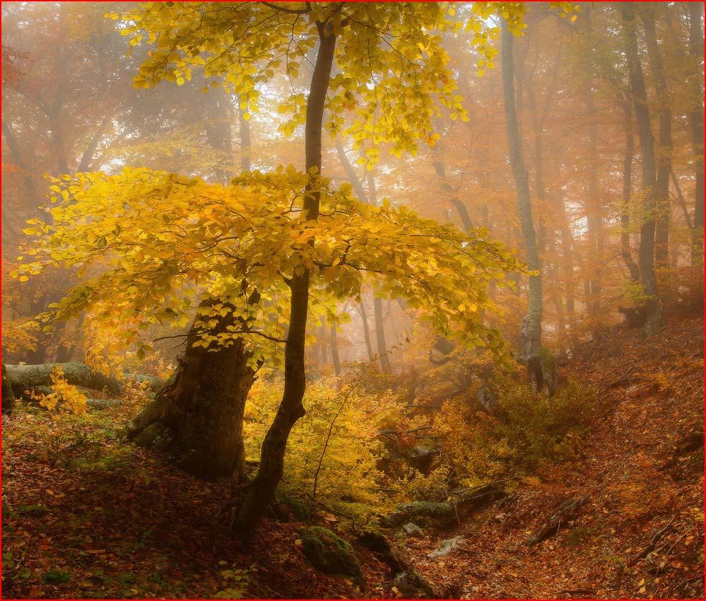 רוח של יער בתמונות של אנדריי אולשוב