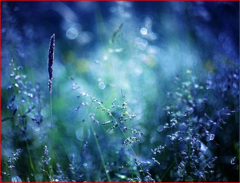 הפרחים של ברברה פלורצ'יק