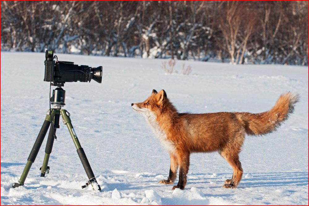 צלם אותי!