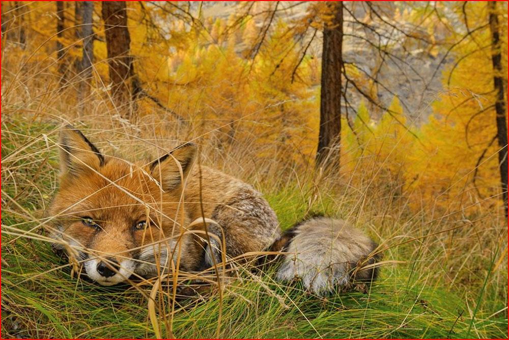 חיות היער