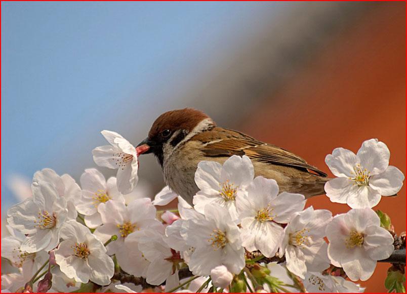 ממלכת ציפורים