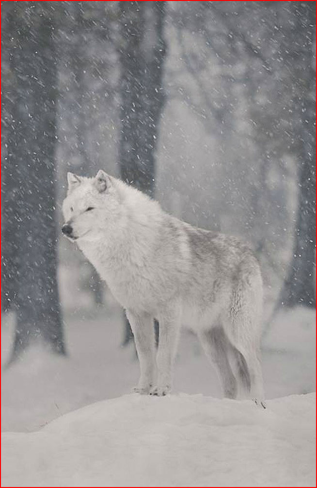בעלי חיים בחורף
