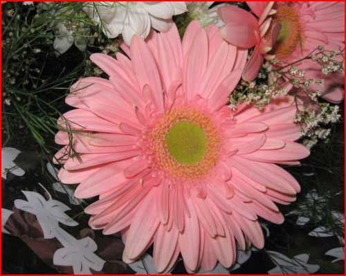 פרחים יפים