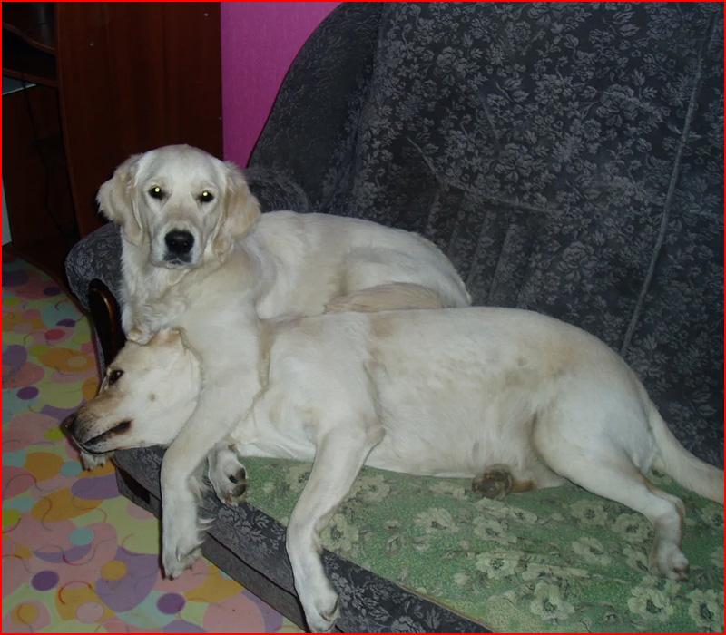 חברים הכי טובים