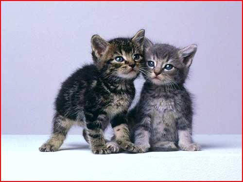 גורי חתולים חמודים