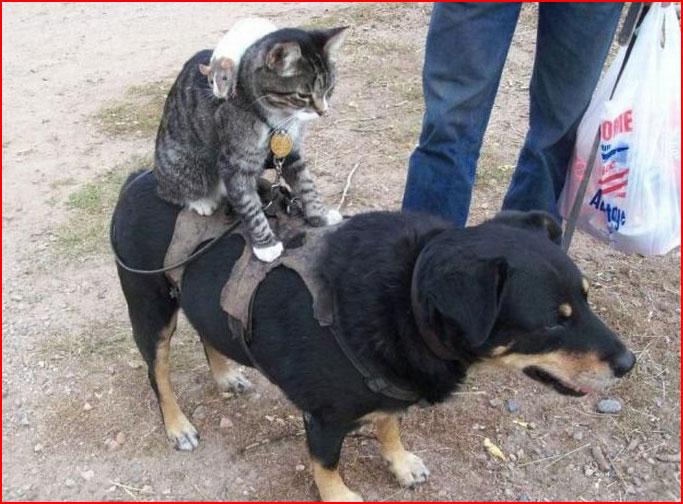 בעלי חיים מצחיקים