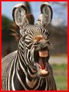 צילומים מדהימים של חיות הבר (38 תמונות)