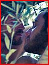 אהבה ביער