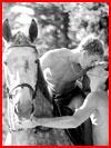 אהבה וסוסים