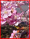 אביב פורח (25 תמונות)