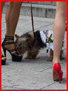 גברת עם כלבלב