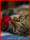 חתולים חמודים (20 תמונות)