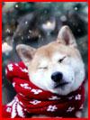 חיות מצחיקות וחמודות בחורף