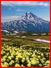פרחים בהרים (25 תמונות)