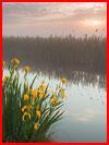 בוקר ערפלי (10 תמונות)