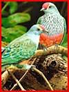 ציפורים (31 תמונות)