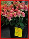 שוק הפרחים בקולון