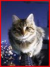 חתול אמיץ מאוד