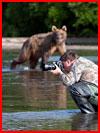 דובים בקמצ'טקה, רוסיה (27 תמונות)