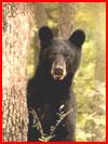 חיות היער (15 תמונות)