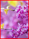 יופי של אביב
