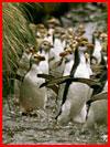 האי של פינגווינים