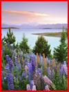 אגם טאקפו בניו זלנד