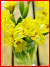 תערוכת הפרחים (20 תמונות)