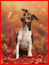 כלבים בסתיו בצילומים של אן גייר מאוסטריה (26 תמונות)