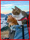 חתולים-תיירים (25 תמונות)