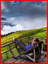 תמונות הטבע של מרק אדמוס (26 תמונות)
