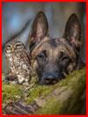ינשוף וכלב בתמונות של טניה ברנט