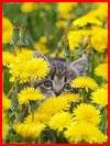 חתולים בחודש מאי (16 תמונות)